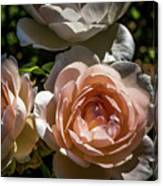 Light Pink Roses Canvas Print