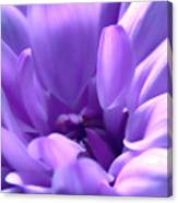 Light Purple Beauty Canvas Print