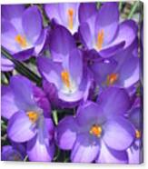 Light Purple Canvas Print