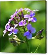 Light Purple Flowers  Canvas Print