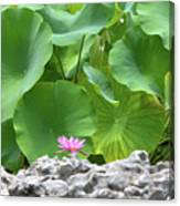 Light Purple Water Lily And Large Green Leaves Canvas Print