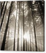 Light Through Forest Canvas Print