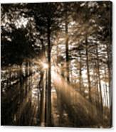 Light Through The Forest Canvas Print