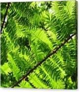 Light Through The Green Canvas Print