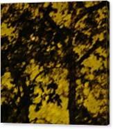 Lighttthru Forest Canvas Print
