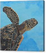 Lil Honu Canvas Print