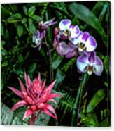 Lilac And Pink Canvas Print