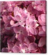Lilac Beauty Canvas Print