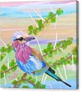 Lilac Breasted Roller In Thorn Tree Canvas Print
