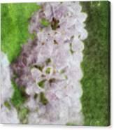 Lilac Dreams - Digital Watercolor Canvas Print