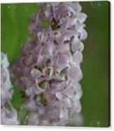 Lilac Dreams With Corner Decorations Canvas Print