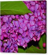 Lilac In The Dark Canvas Print