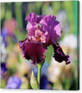 Lilac Iris In Bloom Canvas Print