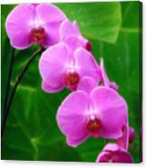 Lilac Orchid Beauties Canvas Print