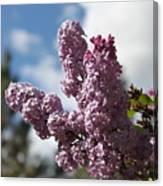 Lilacs 5547 Canvas Print