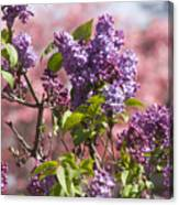 Lilacs And Dogwoods Canvas Print