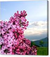 Lilacs And Green Pastures Canvas Print