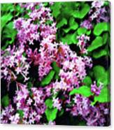 Lilacs In May Canvas Print