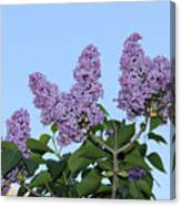 Lilacs In The Sky Canvas Print