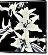Lilies All Aglow Canvas Print