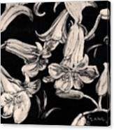 Lilies Black And White II Canvas Print