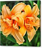 Lilies Collection - 1 Canvas Print