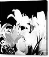 Lilies In Black And White Canvas Print