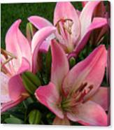 Lilies In Company Canvas Print