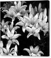 Lilies In My Garden Canvas Print