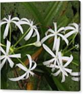 Lilies Of The Swamp Canvas Print