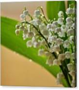 Lilies Of The Valley 1 Canvas Print