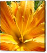 Lilies Orange Yellow Lily Flower 1 Giclee Art Prints Baslee Troutman Canvas Print