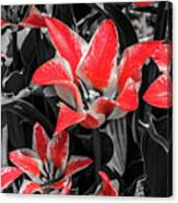 Lilies With A Splash Of Color Canvas Print