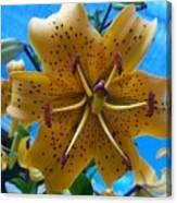 Lilium Yellow Canvas Print