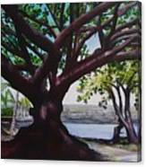 Liliuokalani Park Tree Canvas Print