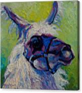 Lilloet - Llama Canvas Print