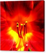 Lilly A Flame Canvas Print