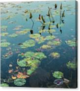 Lilly Pad In Pond  Canvas Print