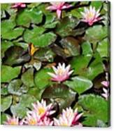 Lilly Pads In Bloom Canvas Print