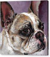 Lilly The French Bulldog Canvas Print