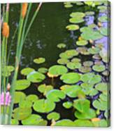 Lillypads And Cattails Canvas Print