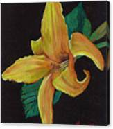 Lily 1 Canvas Print