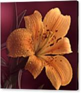 Lily 14 Canvas Print