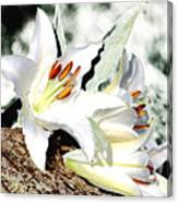 Lily 4 Canvas Print