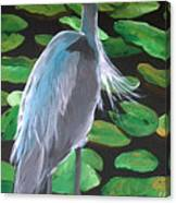 Lily And Egret Canvas Print