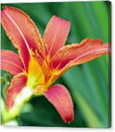 Lily And Glowing Light Canvas Print
