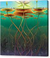 Water Lily - Transmute Canvas Print