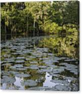Lily Bend On Blind River Canvas Print