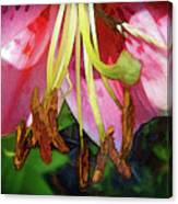 Lily Essence Canvas Print