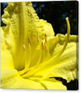 Lily Flower Artwork Yellow Lilies 1 Giclee Art Prints Baslee Troutman Canvas Print